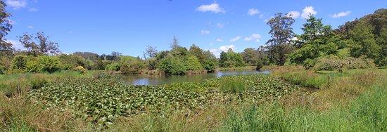 The Tasmanian Arboretum: The lake