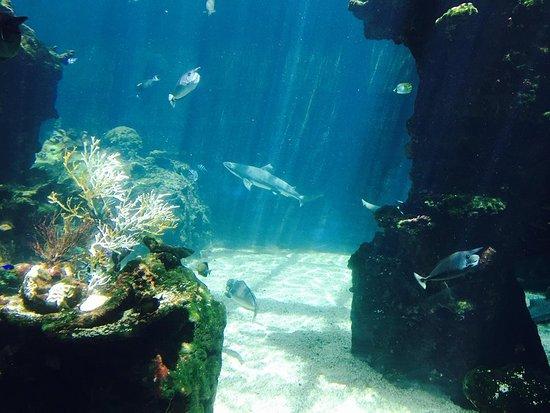 ニューカレドニア ラグーン水族館 Image
