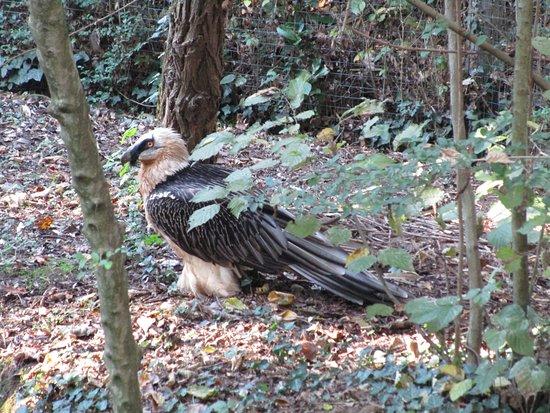 Oasi di Sant'Alessio : Uccello