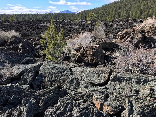 Sunset Crater Volcano National Monument: just one expanse of the lava field; mt. humphrey's in the background