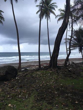 Rosalie Bay Resort: photo3.jpg