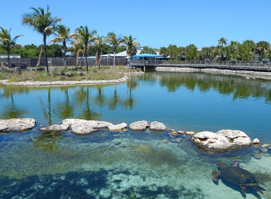 Stuart, FL: The Game Fish Lagoon
