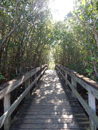 Florida Oceanographic Coastal Center: Take a walk down our mile-long trail