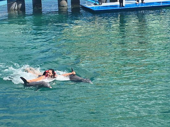 Delfinario en Cayo Santa Maria