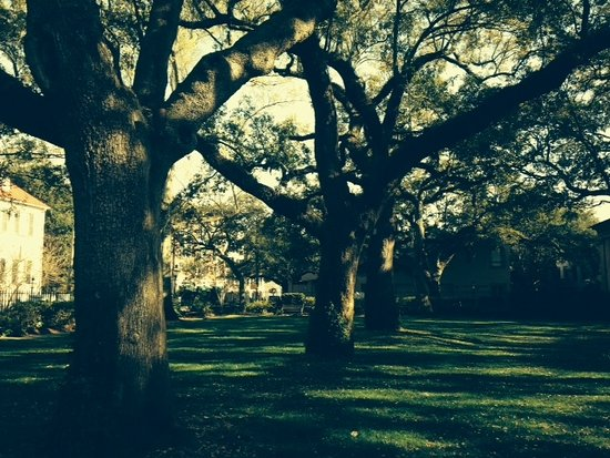 Giant oaks sport Spanish moss at the College of Charleston