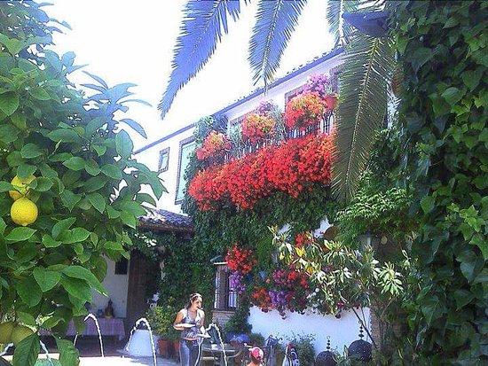 Rute, España: PATIO 4