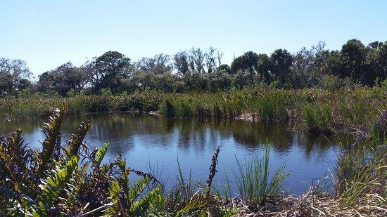 Caloosahatchee Creeks Preserve