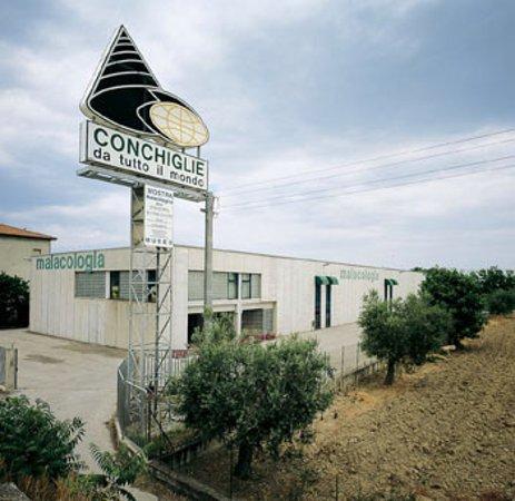 Cupra Marittima, Italy: Museo Malacologico, la struttura