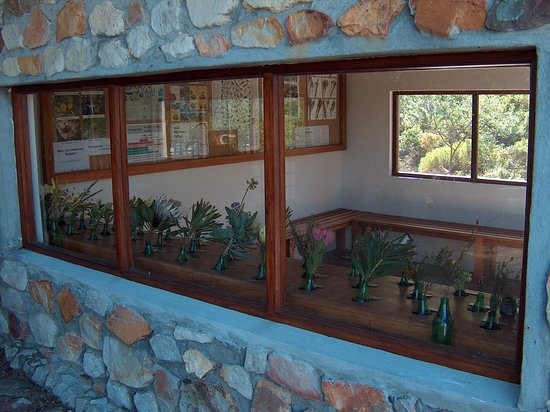 Hermanus, South Africa: Plant house