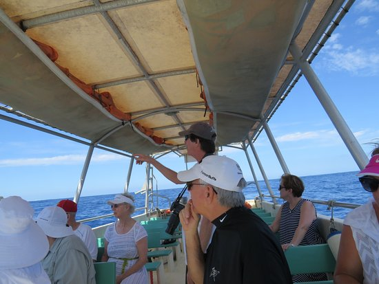 Dr. Poole's Dolphin and Whale Tour: Dr Poole & guests are captivated!