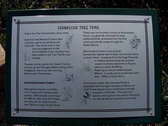 Hermanus, South Africa: Tree Trail