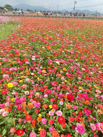Field Of Various Flowers Picture Of Sea Of Flowers In Shinshe