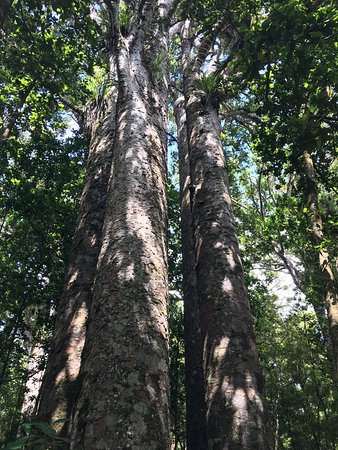 Waipoua Forest Kauri Tour - Mydo New Zealand: photo3.jpg