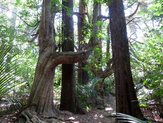 Gisborne, New Zealand: Two trees that rarely grow side by side