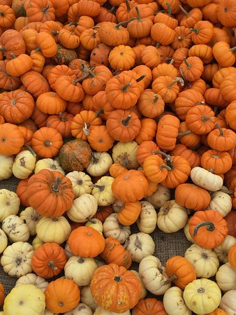 Exeter, RI: Schartner Farm in the fall