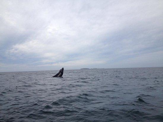 Sayulita Entourage: Humpback Whale