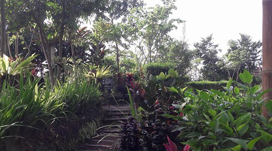 Penebel, Indonesia: The pathway to my dorm