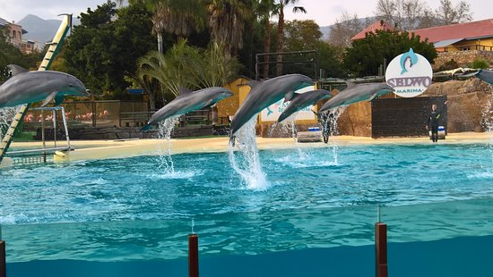 Vincci Seleccion Aleysa Hotel Boutique & Spa: Delfinarium just 5 minutes walk from the hotel
