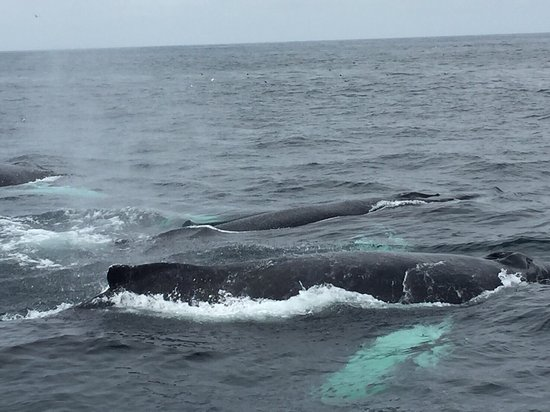 Capt Bill & Sons Whale Watch: photo2.jpg