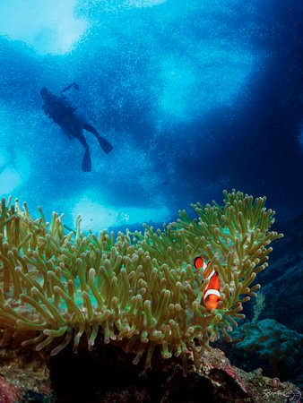 Turtle Bay Dive Resort: Diving