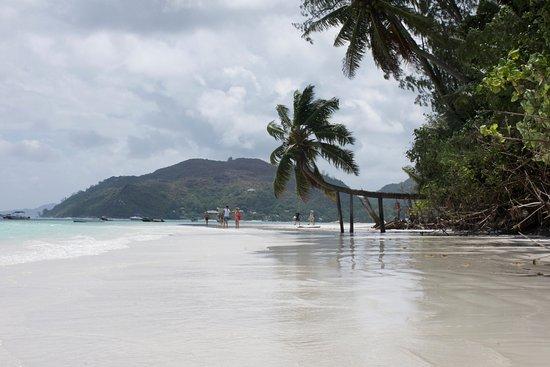 Praslin, Seychellerna: An diese Palme ist Anse Volbert zu erkennen ;-)
