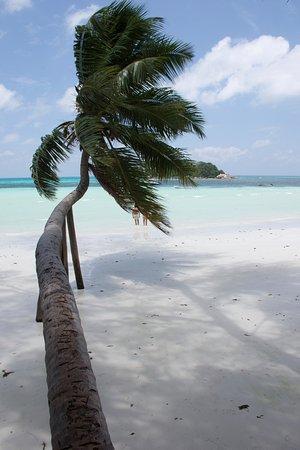 Praslin, Seychellerna: Cote d'Or. Sonne, Strand und Palme.