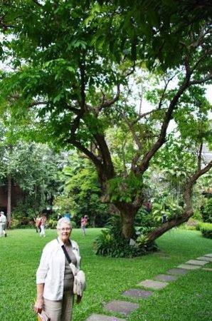 วังสวนผักกาด: Interior grounds that are charming