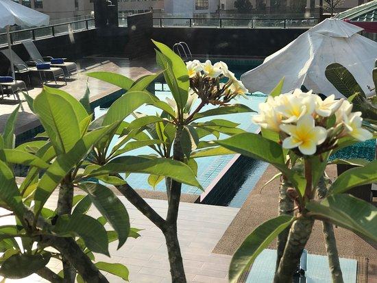 Rashmi's Plaza Hotel: photo2.jpg