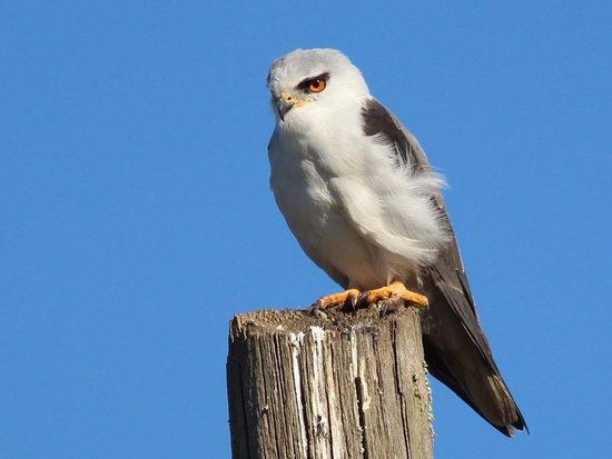 Birdwatching Lisbon