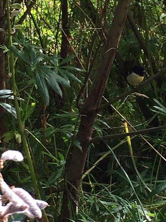Nomad Safaris: Lots birds
