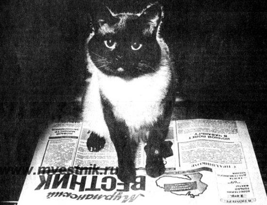 История кота семена в мурманске