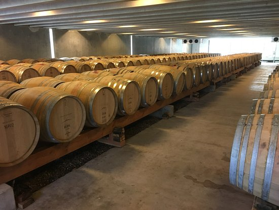 Peregrine Wines: The cellar