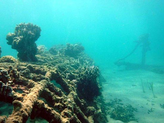 Biorock Pemuteran bali: Под водой