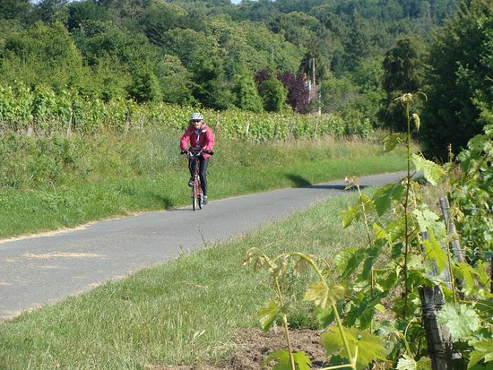 Parcay-les-Pins, France: Cycle through the vineyards of the Loire Valley