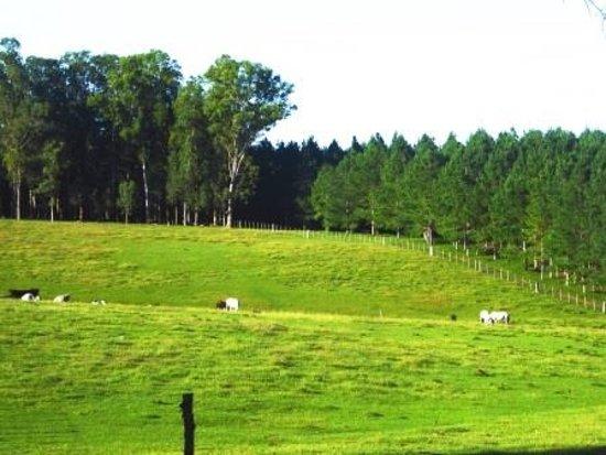 Estancia Pinos de la Quebrada : Pasture