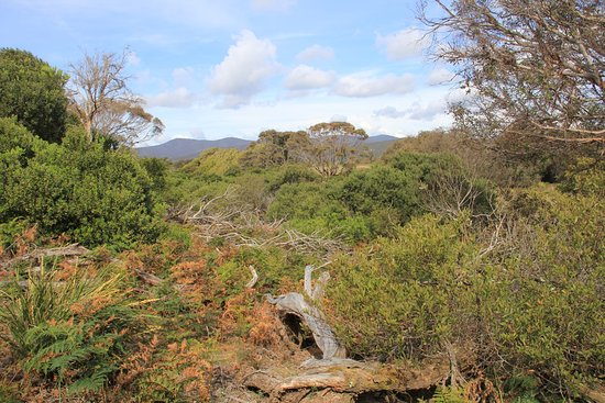 Narawntapu National Park: Walking to the hide