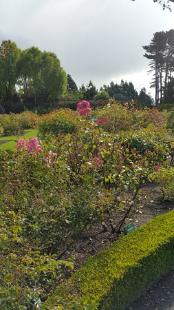 Invercargill, New Zealand: roseto
