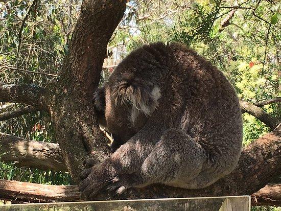 Cowes, Australia: Sleepy Head