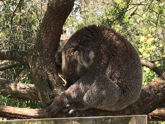 Cowes, Australien: Sleepy Head