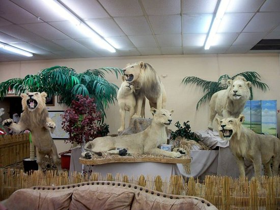 Shell Factory & Nature Park: Taxidermy lions