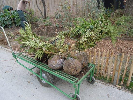 Entretien et plantations du jardin picture of jardin de for Jardin et plantation