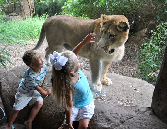 Alexandria, LA: Get up close to lions, giant tortoises, flamingos, and the gaboon viper in the African Experienc
