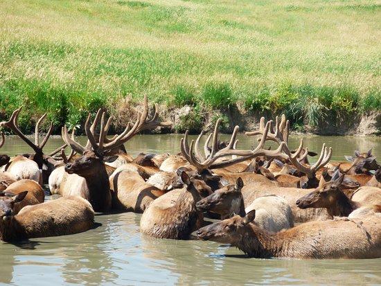 Ashland, NE: Elks - Close up