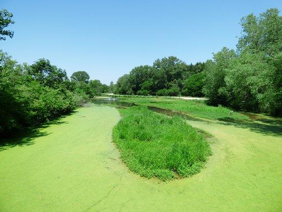 Ashland, NE: Wetlands