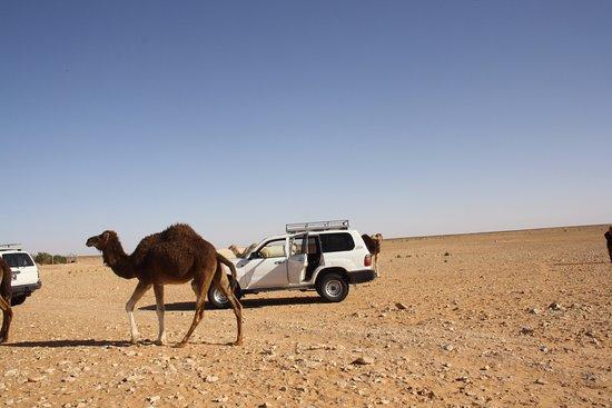 Autre Tunisie Day Tours : On y était