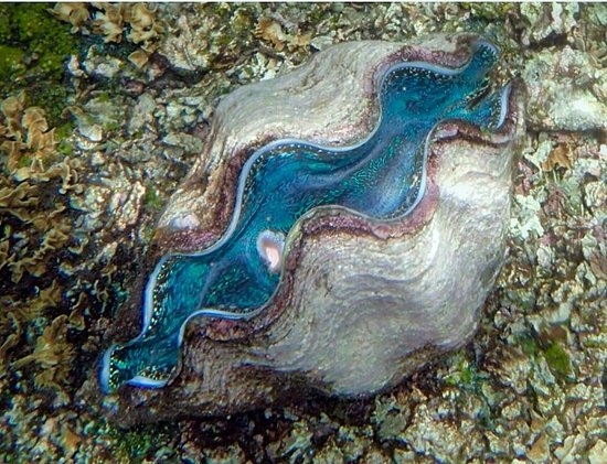 ‪Giant Clam Sanctuary‬