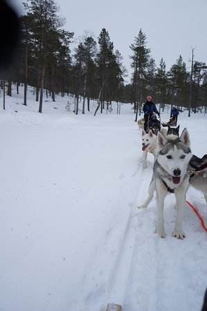 Kamisak Husky and Horse Expeditions - Day Tours: During the husky trip