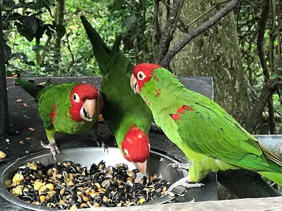 Birds of Eden: photo3.jpg