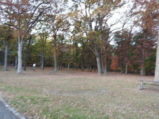 Green Brook, NJ: alberi