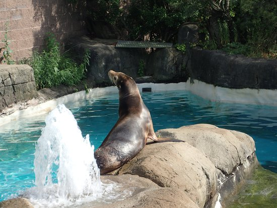 Pittsburgh Zoo & PPG Aquarium: Sealion sunbathing